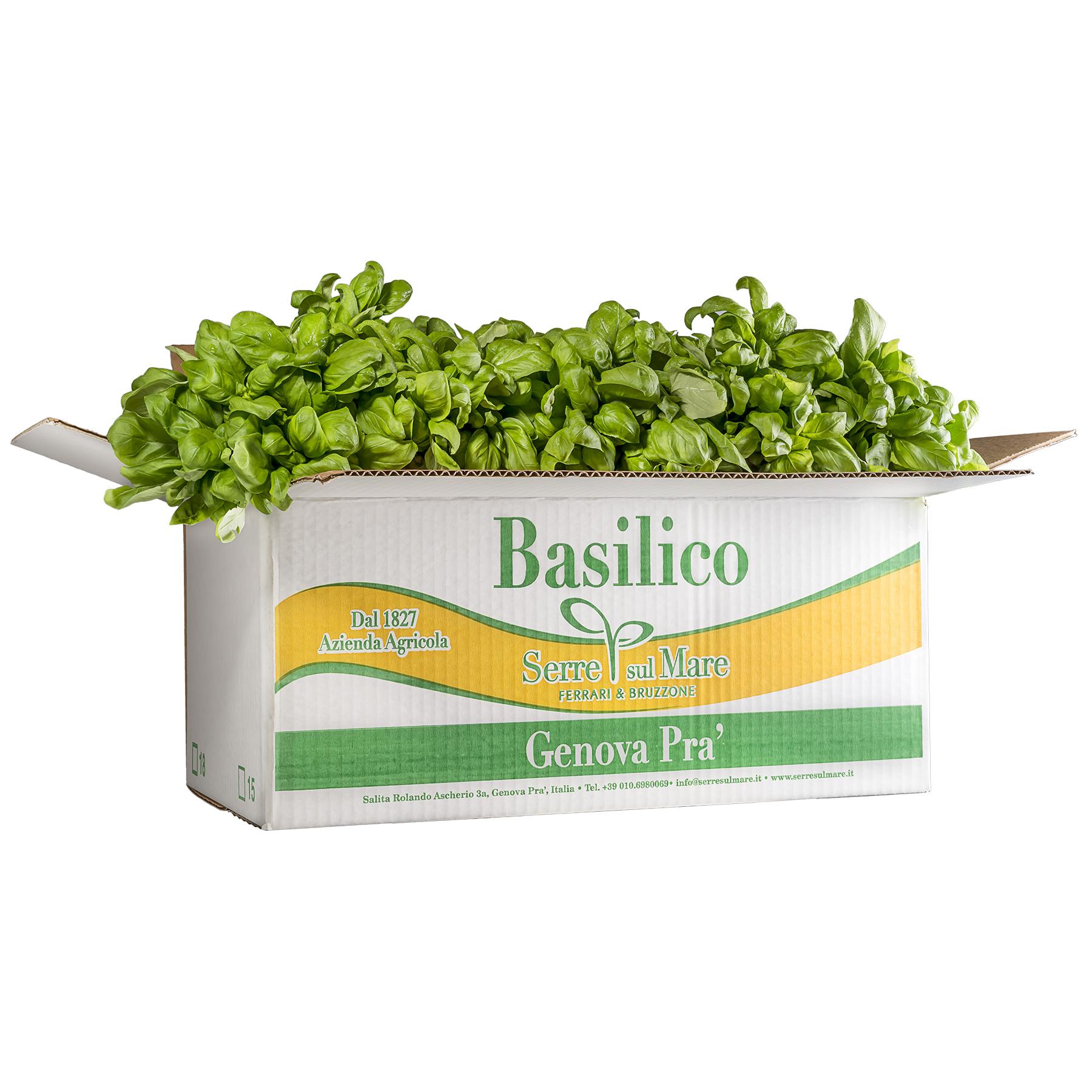 scatola-basilico-serre-sul-mare